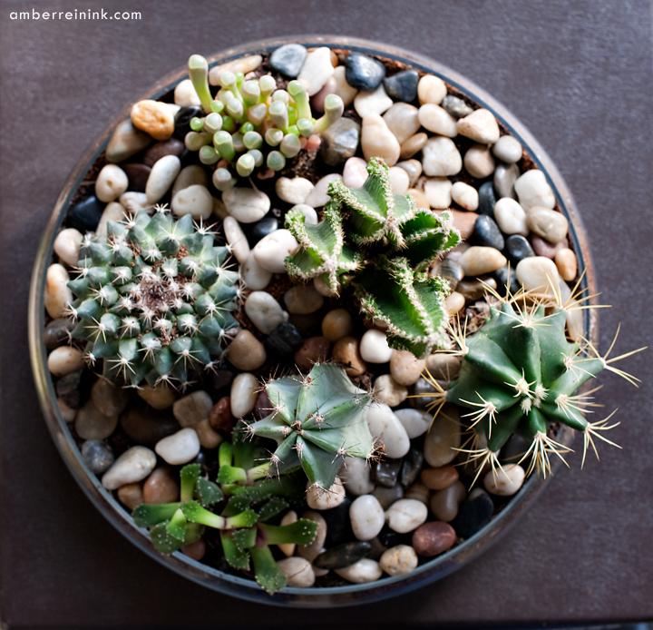 Impressive Cactus Soil Home Depot 720 x 694 · 412 kB · jpeg