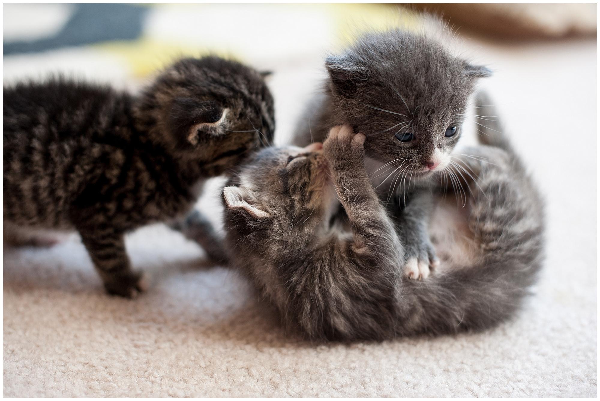 The Adventure of Raising Baby Kittens Part 2