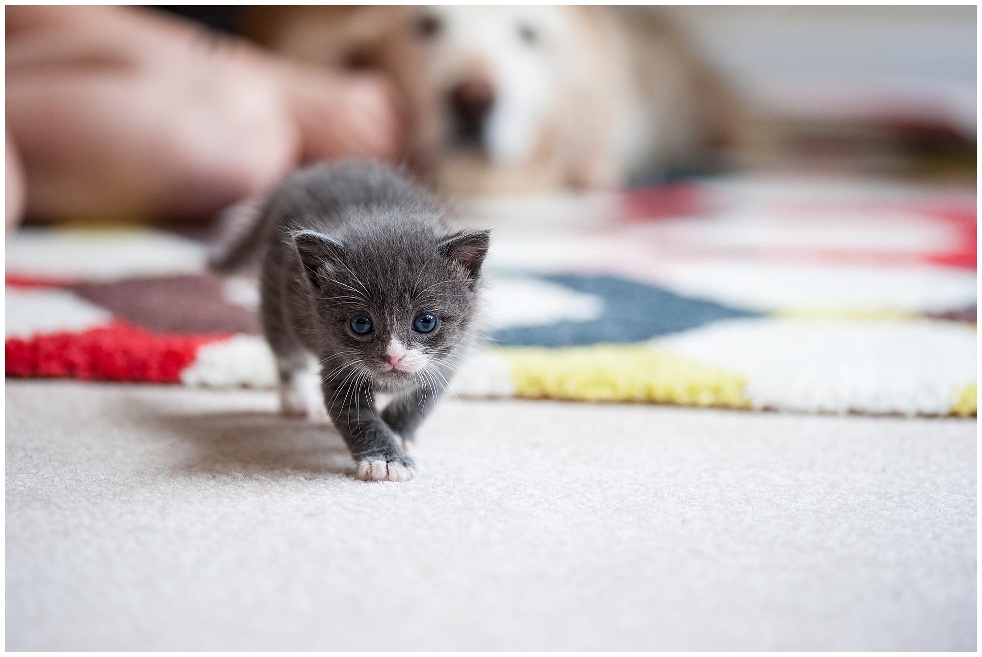The Adventure of Raising Baby Kittens Part 3